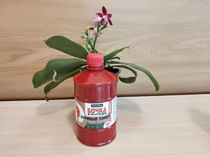 Бочка и четыре ведра - удобрение для орхидей
