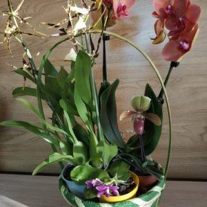 """Композиция из орхидей """"Фигаро"""""""