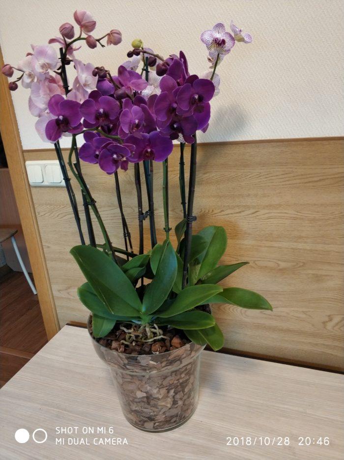 """Композиция из орхидей """"Наина"""""""